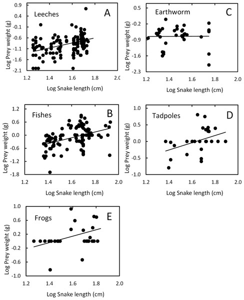 Relation between prey mass and snake length of T. eques.