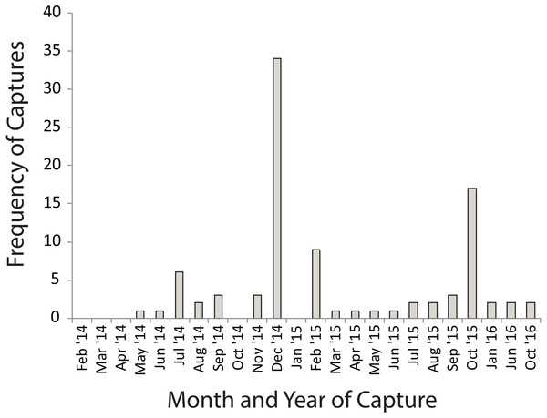 Numbers of Xenopus laevis caught per month in a pond other than the one in which they were marked.