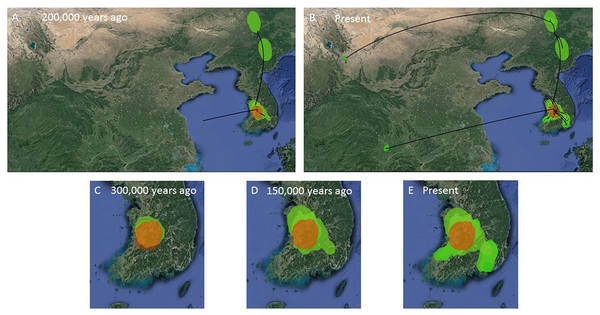 MCC Bayesian phylogeographic projections for Bufo gargarizans at different times scales.