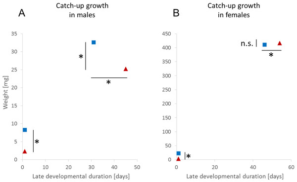 Adaptive catch-up growth in (A) male and (B) female Nephila senegalensis.