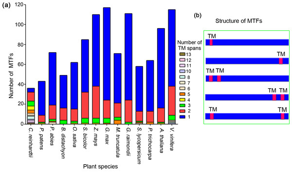 Analysis of transmembrane motifs of membrane-bound transcription factors in plant species.