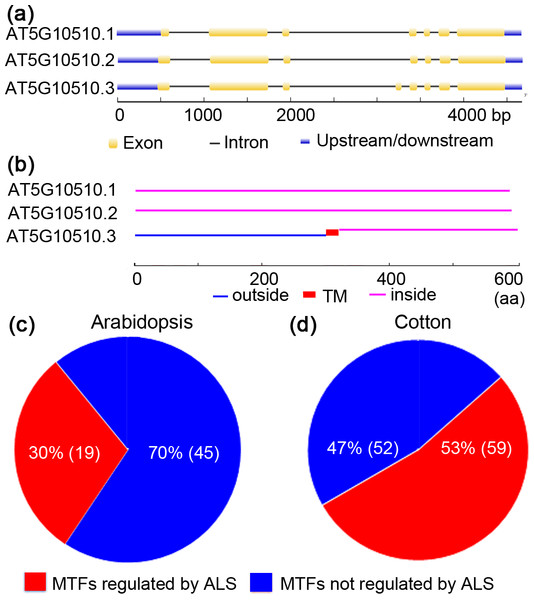 Alternative splicing of membrane-bound transcription factors in Arabidopsis (Arabidopsis thaliana) and cotton (Gossypium raimondii).