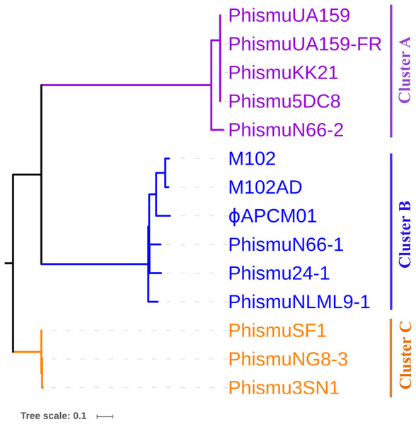 Phylogenetic analysis of S. mutans (pro)phage genomic sequence alignment.