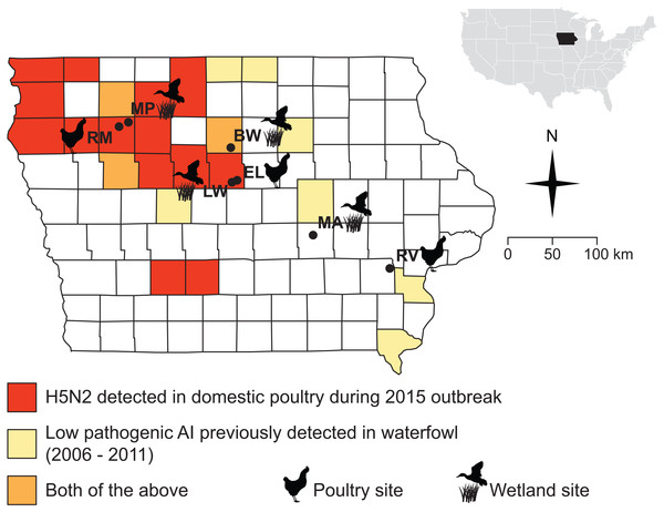 Sampling sites were chosen in counties where the 2015 H5N2 outbreak occurred (red, orange) or along a diagonal band where prior surveillance had found AIV in waterfowl (yellow, orange).