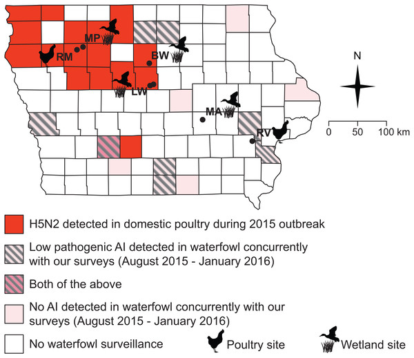All but one of our sampling sites fell within counties impacted by the 2015 H5N2 outbreak or adjacent to counties where low pathogenic AIV was detected in waterfowl between August 2015 and January 2016.