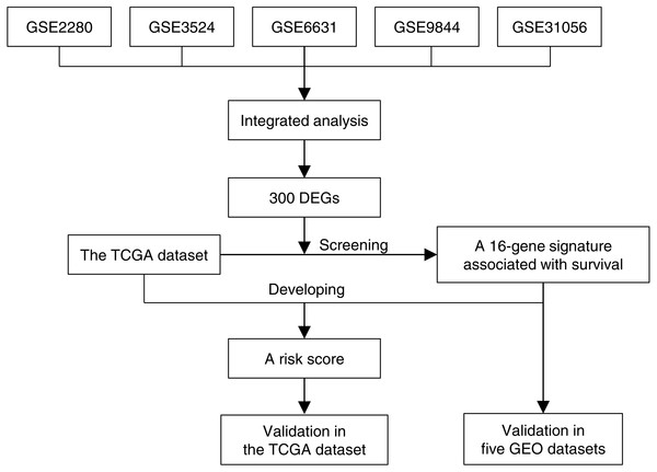 The 16-gene signature development and validation workflow.