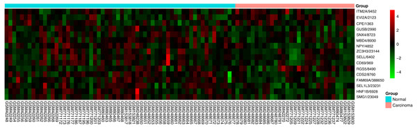 Heatmap of the 16-gene signature in five GEO datasets.