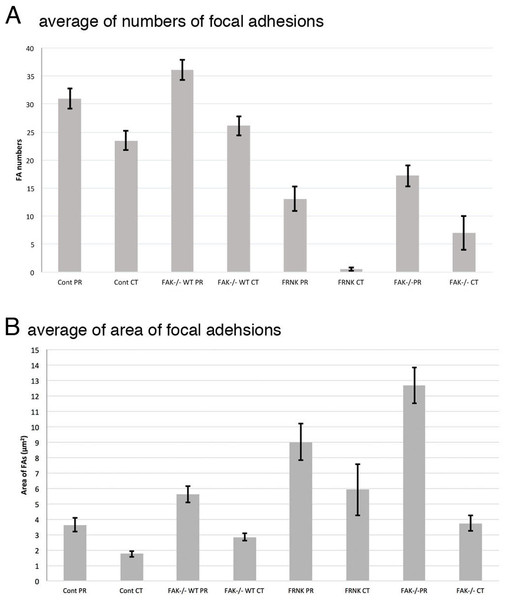 Graphical quantification of focal adhesion numbers (A) and area (B).