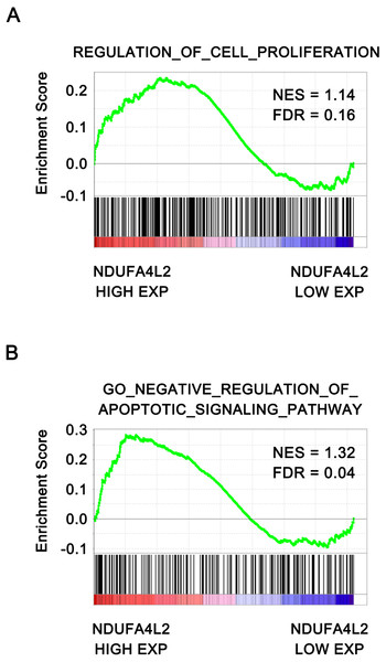 NDUFA4L2 level is positively correlated with cell proliferation and anti-apoptosis.