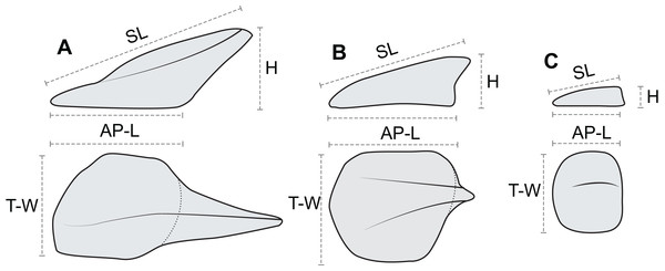 Linear osteoderm measurements used in allometric and morphometric analyses.