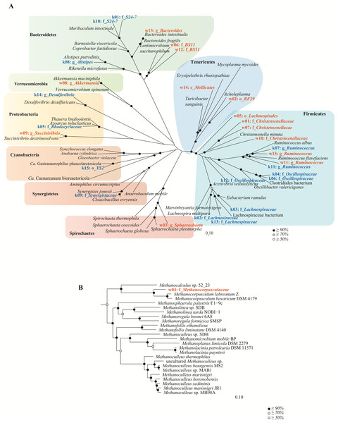 Genome-based phylogeny of population genomes extracted from shotgun sequencing of the koala and wombat fecal microbiomes.