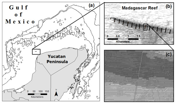 Location of Madagascar reef in the Gulf of Mexico (A) and distribution of sampling points across the bathymetric gradient along the reef (B, C).