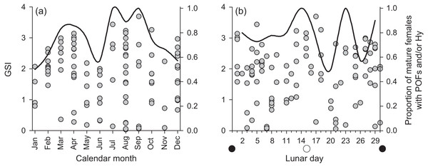 Plots of raw gonadosomatic index values (left y-axis) for mature, active female Hipposcarus longiceps (n = 103) across (A) calendar months and (B) lunar days.