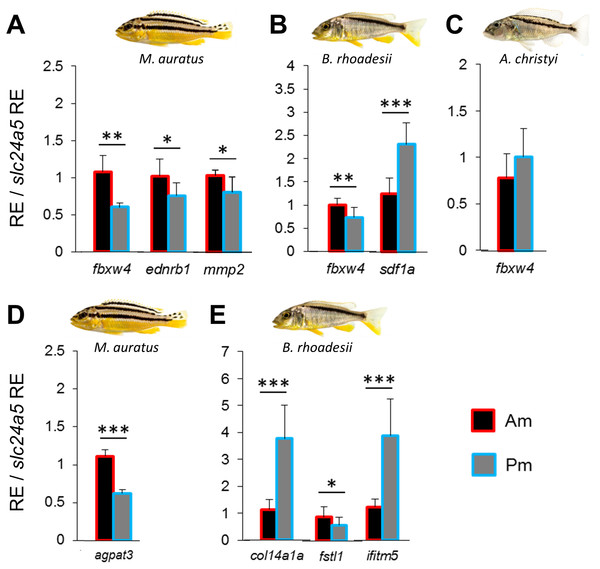 Expression differences of stripe pattern candidate genes along the dark mid-lateral stripe.