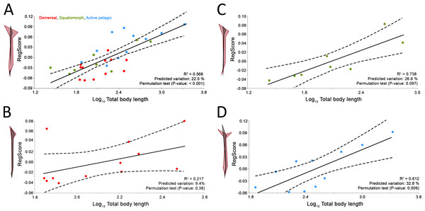 Allometric regression analysis results for (A) the whole group of sharks and the ecological subgroups of (B) demersal, (C) squalomorph and (D) active pelagic shark species.