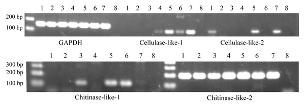 Expression patterns of cellulase- and chitinase-like genes in certain life stages of Acropora digitifera.