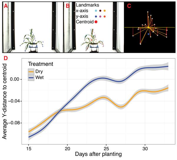 Landmark-based analysis of plant shape in PlantCV.