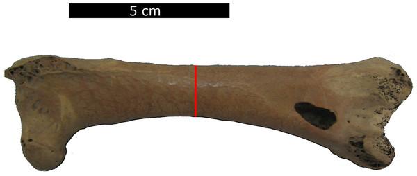 Measurement position.