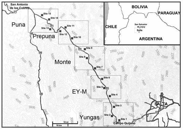 Map of the studied area showing the sample sites in different eco-regions in Salta Province, Argentina.