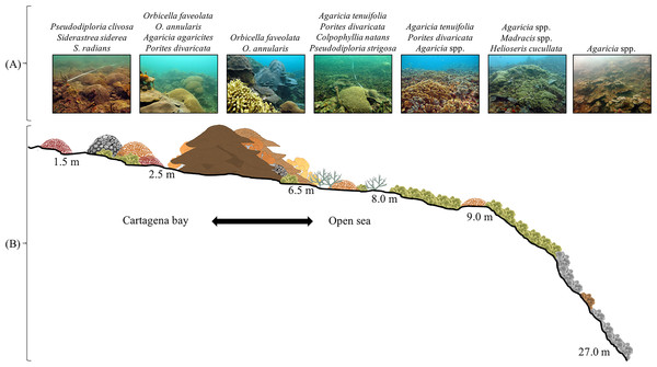 Varadero Reef profile.