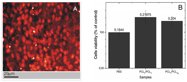 PCL5/PCL10 are nontoxic, and the support well growth of human cells.