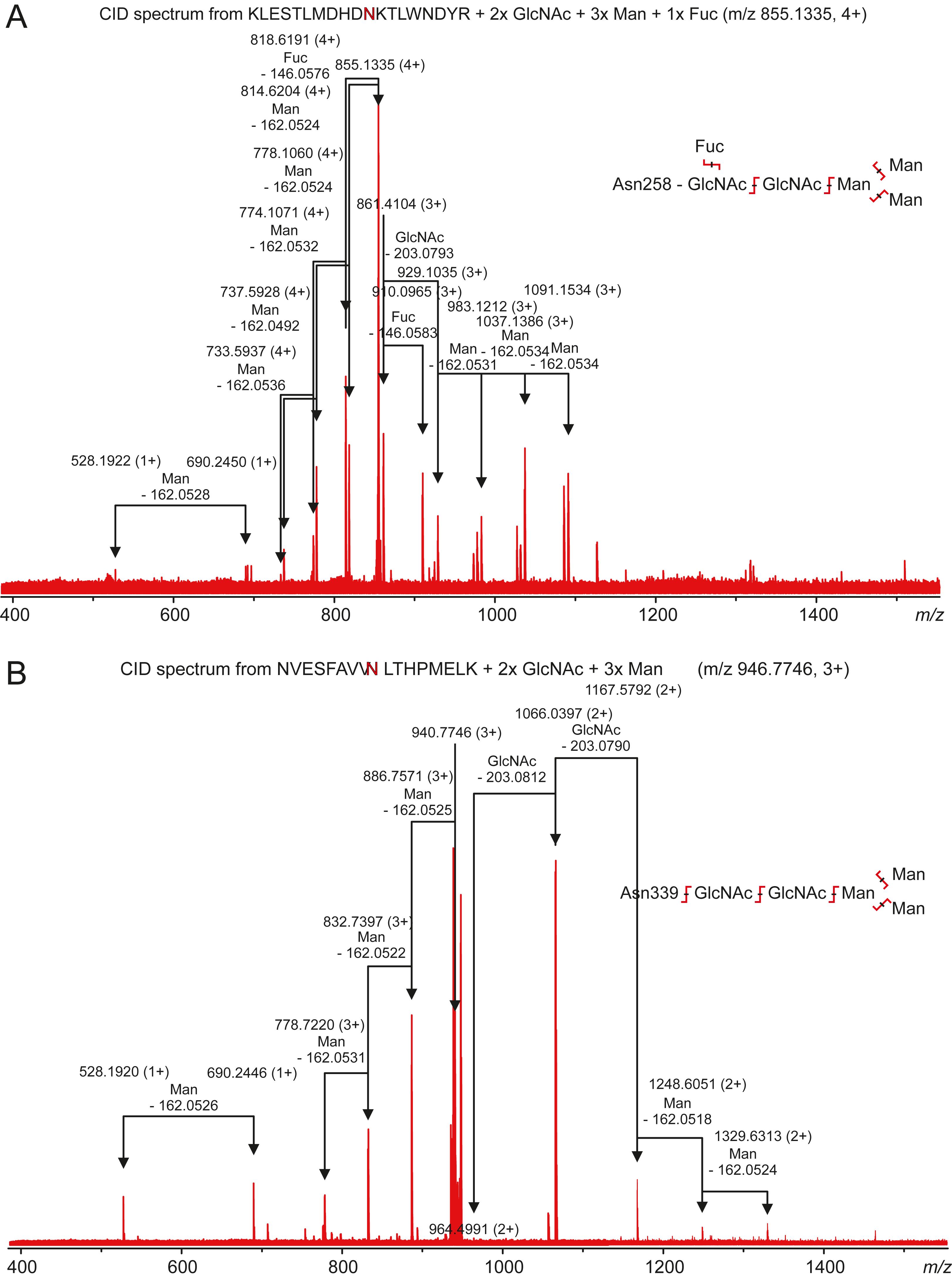Identification and characterization of a novel zebrafish