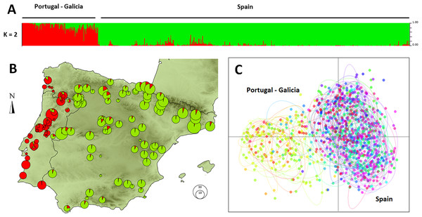 Genetic clustering of 992 individuals of Monochamus galloprovincialis sampled at 132 locations.