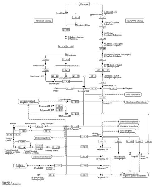 Terpenoid backbone biosynthesis (KEGG map 00900).