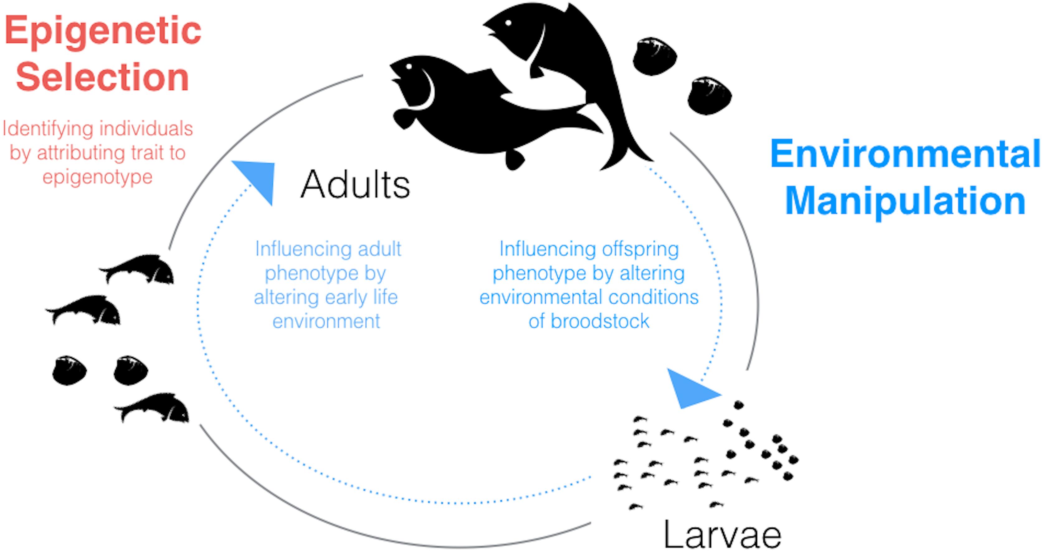 Shared Epigenetic Changes Underlie >> Epigenetic Considerations In Aquaculture Peerj