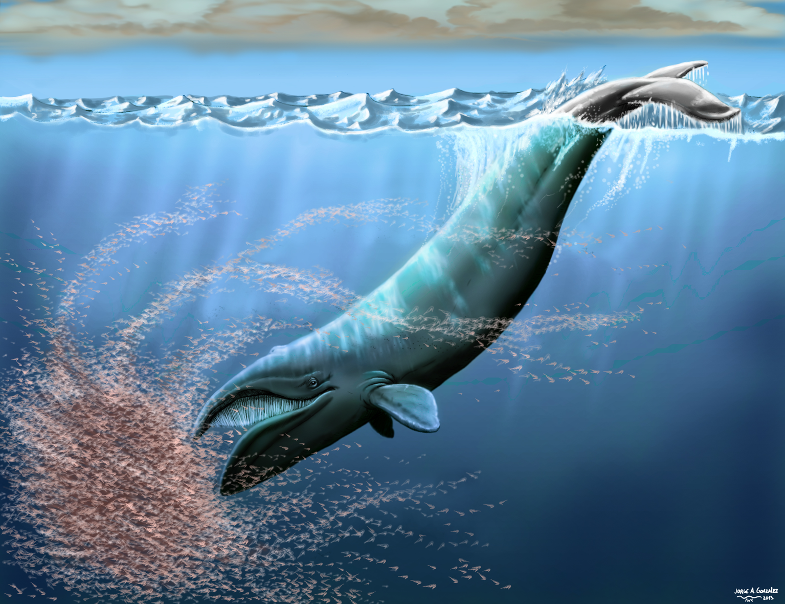 new Iniid cetacean from the Miocene of California