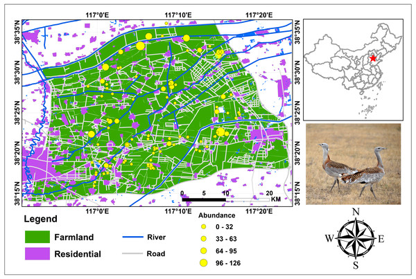 Study area and bird abundance and occurrence data for Great Bustard in Cangzhou, China.