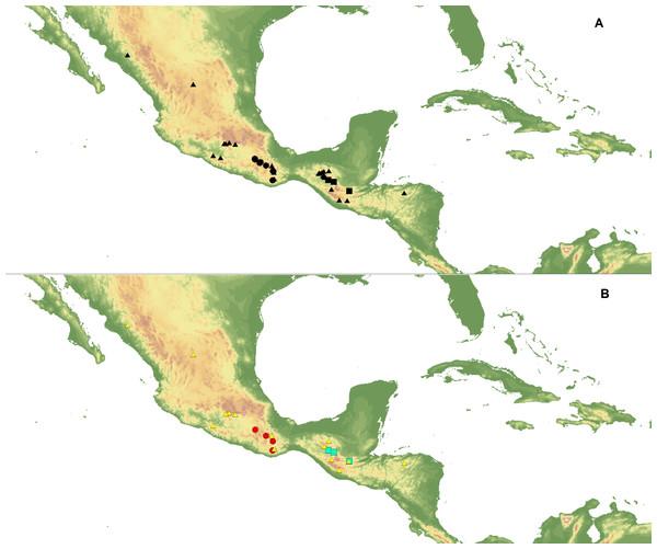 Localities of C. dickinsonianum (square), C. irapeanum (triangle) and C. molle (circle) used in ENM analysis.