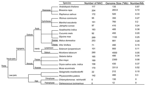 Comparative genomic analysis of NAC transcription factors of radish with other species.