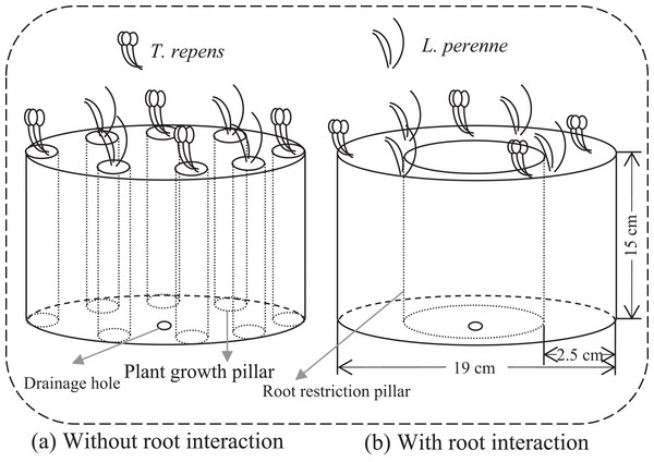 Conceptual diagram illustrating microcosms without and with root interaction.