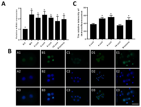 Relative expression of JARID2 in bovine oocytes and early embryos.