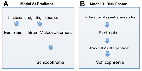 Depiction of two models (Models A and B) of how the correlation between exotropia and schizophrenia may be interpreted, keeping in mind that correlation alone is not evidence for causation.