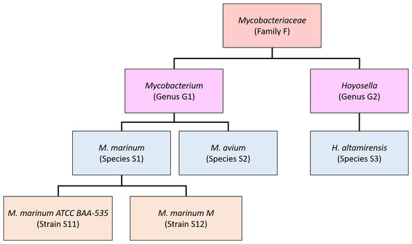Schematic showing a partial taxonomic tree for the Mycobacteriaceae family.