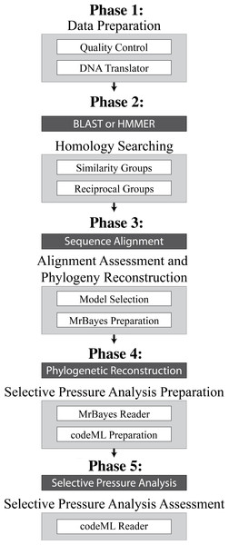 Overview of the 5 Phases implemented in VESPA.