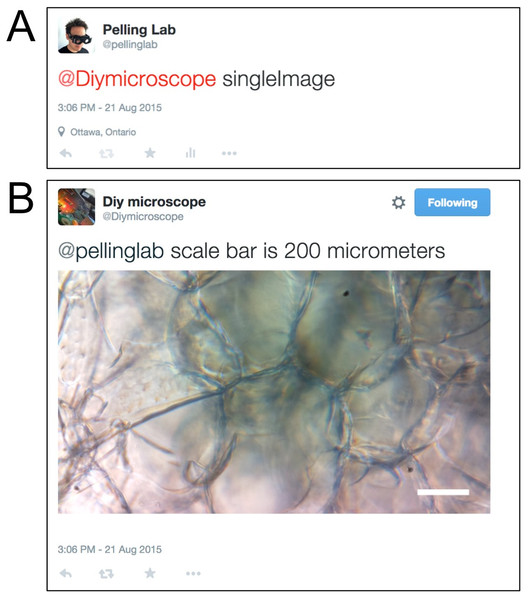 Twitter acquisition of a single image from the DIY Microscope.