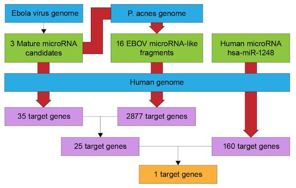 Flowchart of target gene prediction.