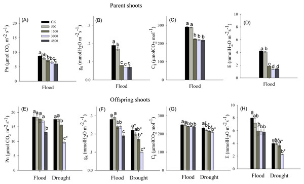 Photosynthetic parameters in parent and offspring shoots of Phragmites australis subjected to Pb contamination in flood and drought conditions.
