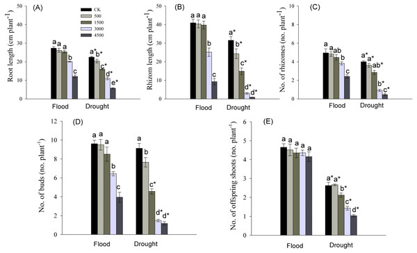 Parameters of root and clonal growth of Phragmites australis subjected to Pb contamination in flood and drought conditions.