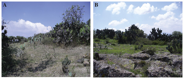 Difference in xeric scrub vegetation in the dry and rainy season.