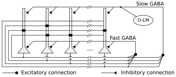 Network architecture, with the recurrent connections among pyramidal neurons, fast and slow GABAergic connections, and O-LM inhibitory population.