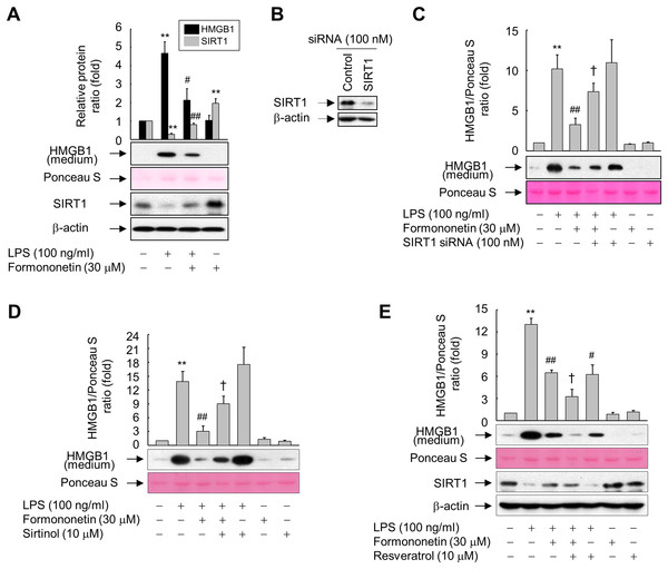 Involvement of SIRT1 in the formononetin-mediated inhibition of LPS-induced HMGB1 release in RAW264.7 cells.
