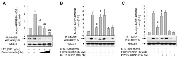 Effect of formononetin on LPS-induced HMGB1 acetylation.