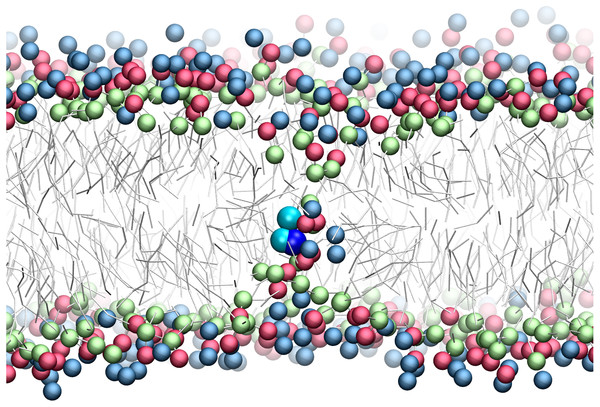 Snapshot of p-p-pos Arg (cyan-cyan-blue spheres) restrained near the center of the bilayer.
