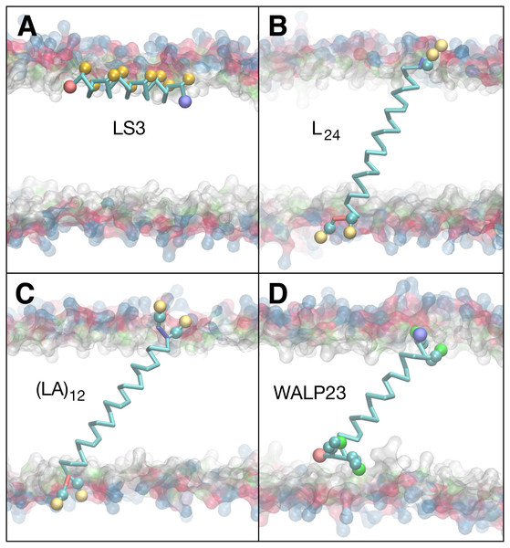 Equilibrated peptide orientations in µs membrane-bound simulations.