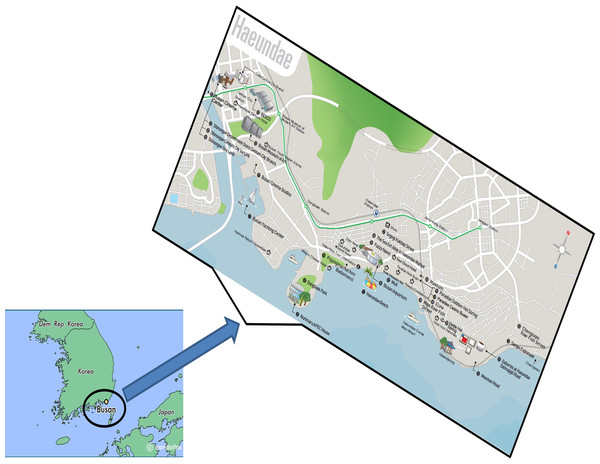 The geographical location of a beach in Busan, Republic of Korea, which attracts numerous visitors, from where sand samples were collected.