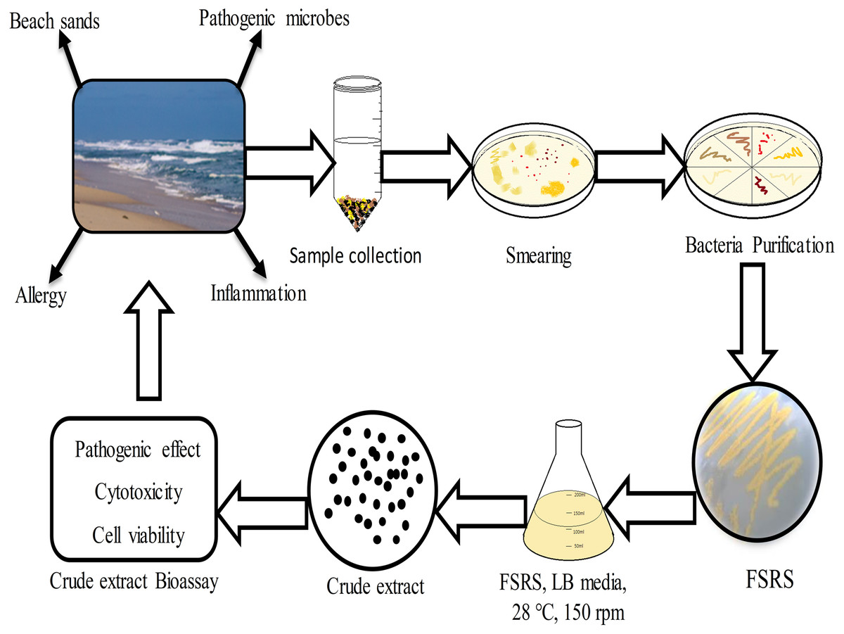 Isolation, identification, and pathological effects of beach sand